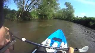 Spływ kajakowy Prochowice   Ścinawa