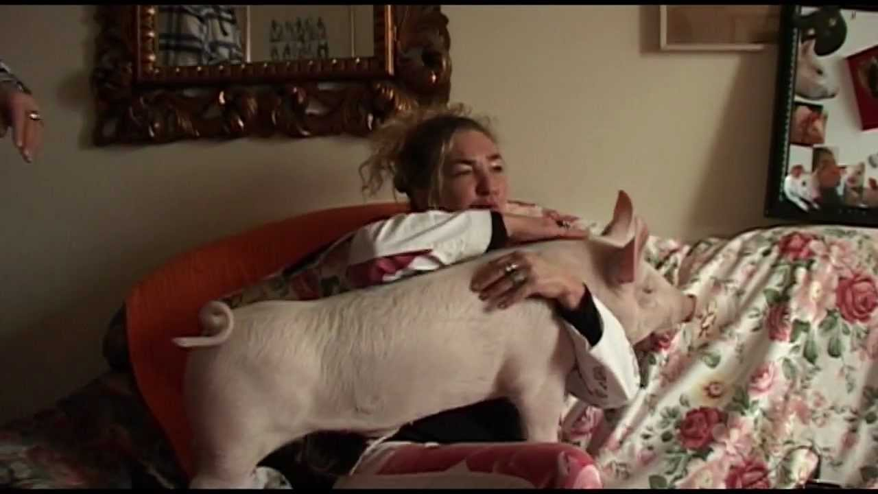 L 39 anno del maiale youtube - Maiale sul divano ...