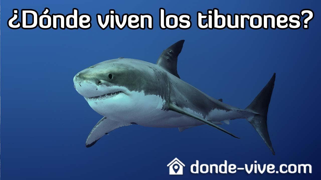 D nde viven los tiburones la respuesta aqu youtube - Donde viven los acaros ...