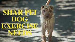 Shar Pei Dog Exercise [Needs and Ideas]