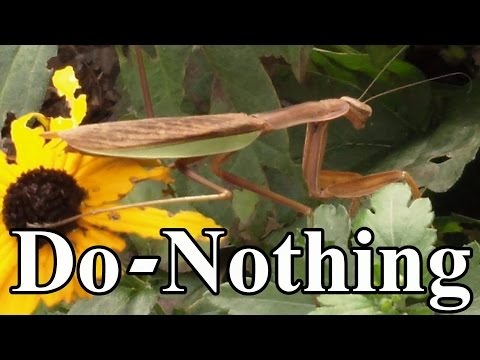 Toward a Do-Nothing Gardening, pt. 5: Organic Pest Management (Lazy Gardening)