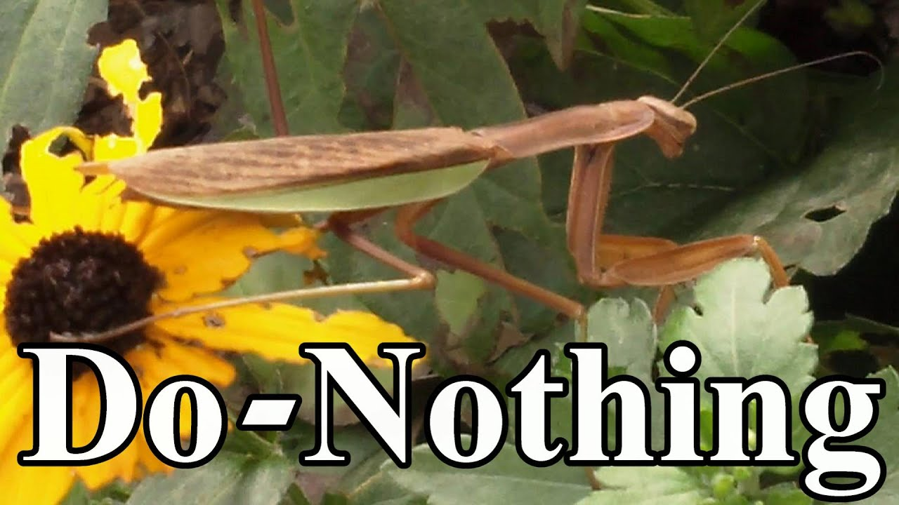 Toward a Do-Nothing Gardening, pt. 5: Organic Pest Management (Lazy ...