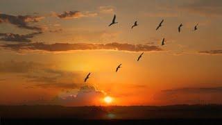 Nurу Halmamedov \Fly, cranes\