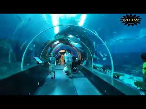 Sentosa Aquarium 2018 In Singapore