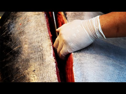 Giant Tuna Cutting Show Sashimi / Korean street food/