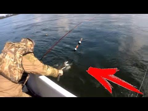 Ловил с лодка мушка