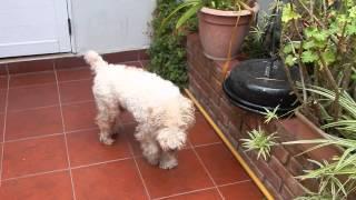 la perra #juana. en el patio
