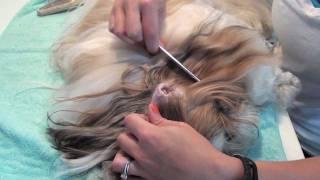 Grooming Series: Ear Cleaning