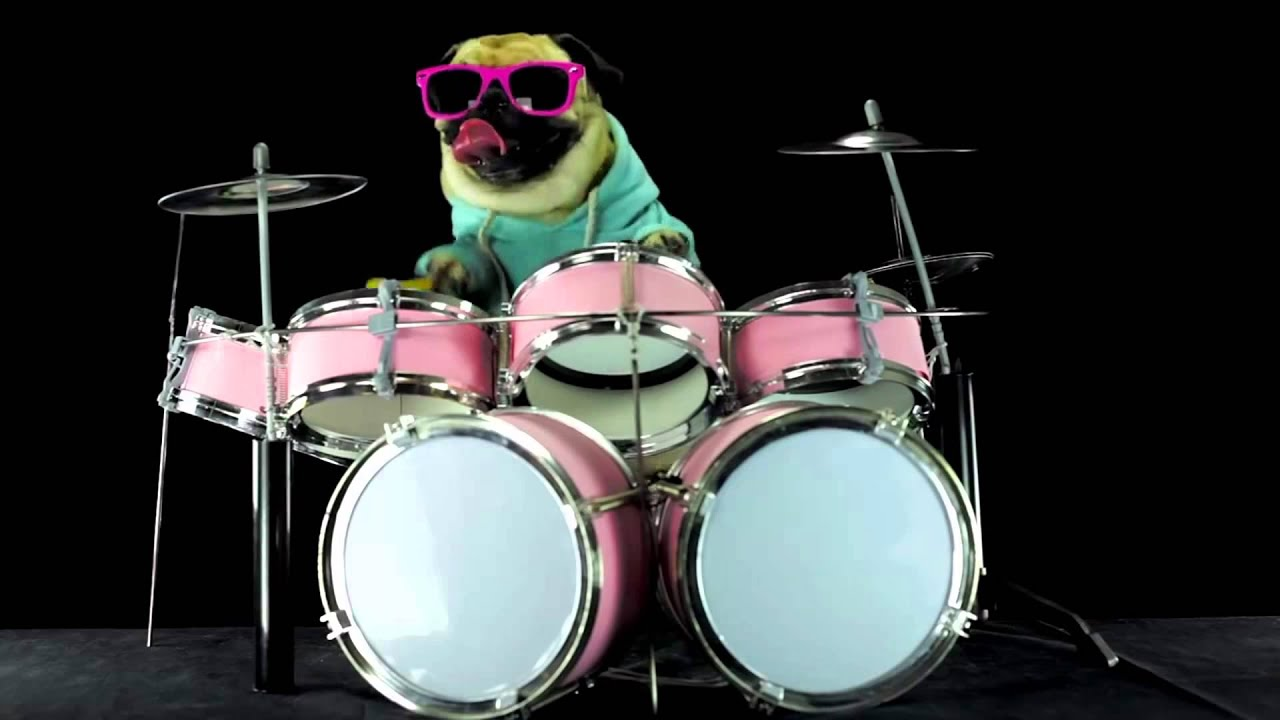 Funny Video┃ How To Be A Dog Make A Professional Drummer ┃ Funny ...