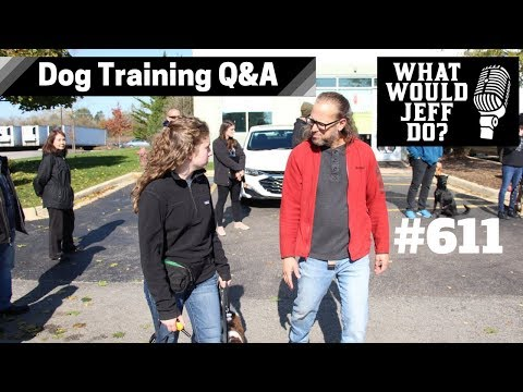 Dog Training  How to Stop Dog Barking  Stop Dog Pulling  What Would Jeff Do? Q&A  Ep.611 (2019)