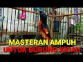 Mantenan Gacor Siburung Masteran Untuk Burung Kicau  Mp3 - Mp4 Download