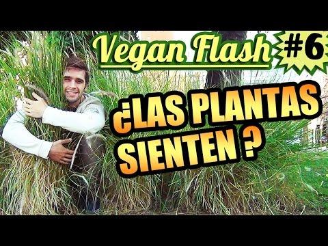 ¿Las plantas sienten?