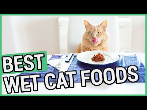 Best Wet Cat Food | 5 Best Canned Cat Foods 2020 🐱 ✅
