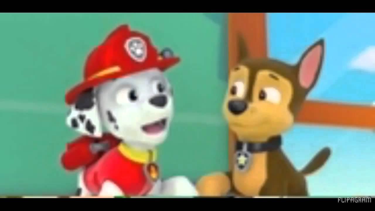 pups save friendship day amv sisi ni sawa  we re the same