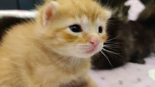 Princess Paisley New Kingdom... plus kittens!