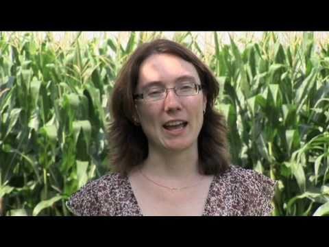 Meet an Ontario Grain Farmer Video