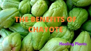 THE BENEFITS OF CHAYOTE FOR HEALTH - DIABETES, CHOLESTEROL, LOW WEIGHT
