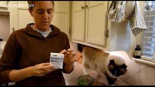 Probiotics for Cats - Purina Fortiflora Feline Nutritional Supplement Box - ねこ - ラグドール - Floppycats