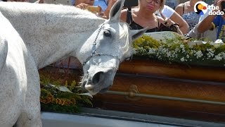 Horse Says Goodbye at his Human Dad's Funeral | The Dodo
