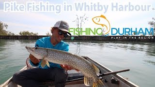 TIMP series Teaser Pike fishing in the Whitby Harbour FishingDurham