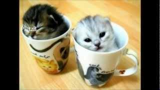 Die 10 lustigsten Katzen der Welt
