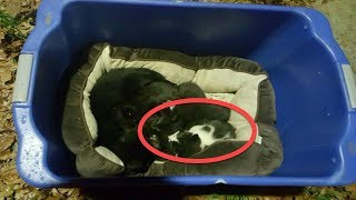 When Rescuers Looked Closer At This Cat Mothering Kittens, They Realized They'd Made A Big Mistake