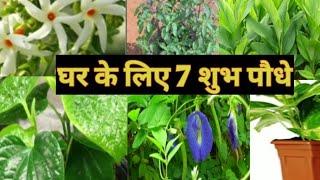 7 पौधो के नाम जो घर के लिये है शुभ Lucky plants ..... Organic gardening landscape
