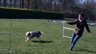 Aybo agility training Thumbnail