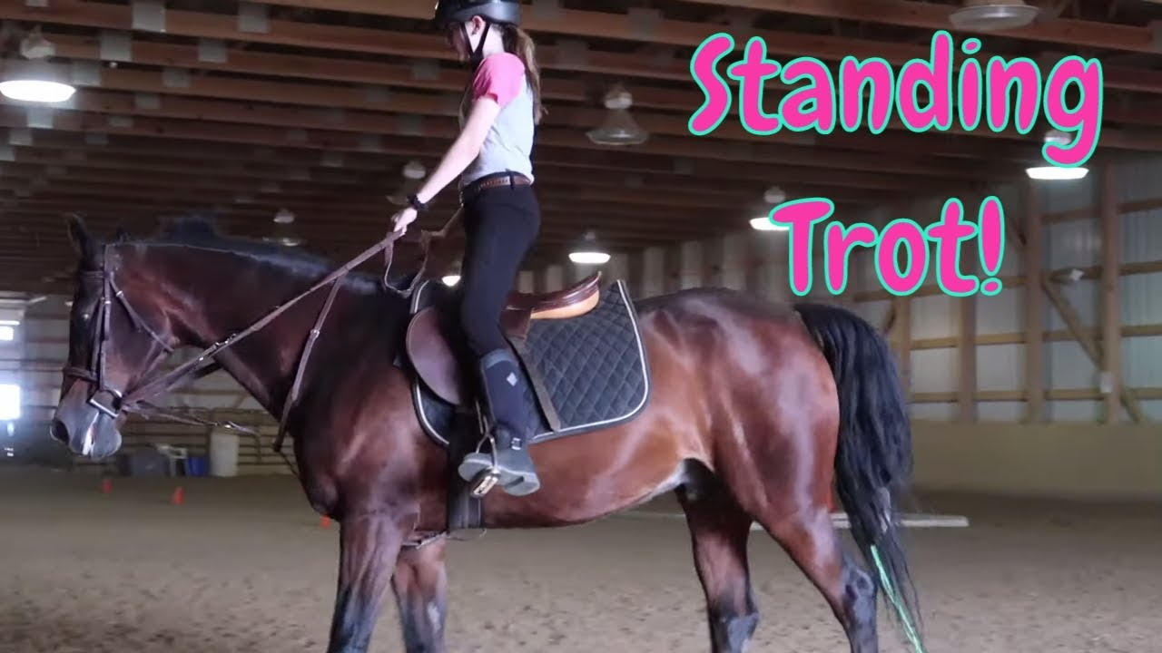 ?Riding A National Horse Champion! ?Riding Lessons Standing Trot & Standing 2 Point!?FIRST DAY T