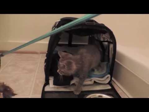 знакомства wild kitten