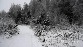 снегопад . лес. дорога .