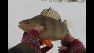 Горбач хорош Лед 2019 рыбалка на плотву окунь на мормышку и щука на жерлицы