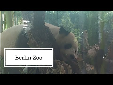Day 3. in Berlin (Vlog) | Mauerpark and Berlin Zoo