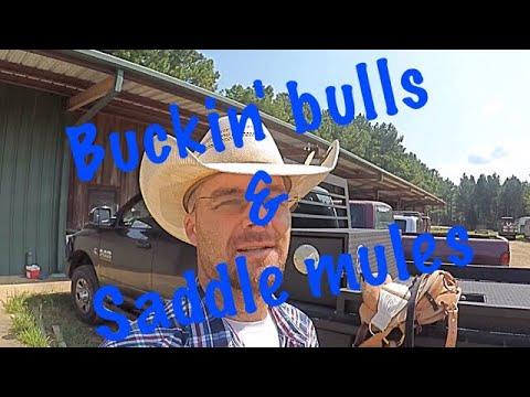 BUCKIN BULLS & SADDLE MULES