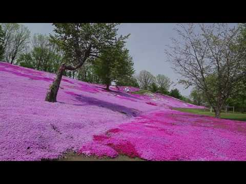 A trip to Engaru in Hokkaido – Moss phlox at a little-known park and a farm with Swiss-like views