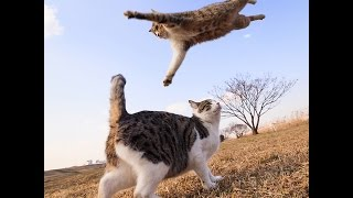 Прикол!Кошки отлично прыгают