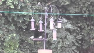 New Bird Feeding Station.