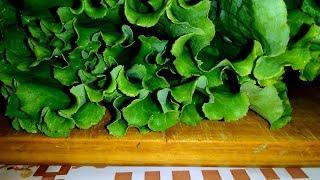 Салат летний с листьями салата и сухариками!