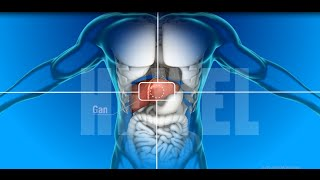 HEWEL - Vai trò, cấu tạo của gan