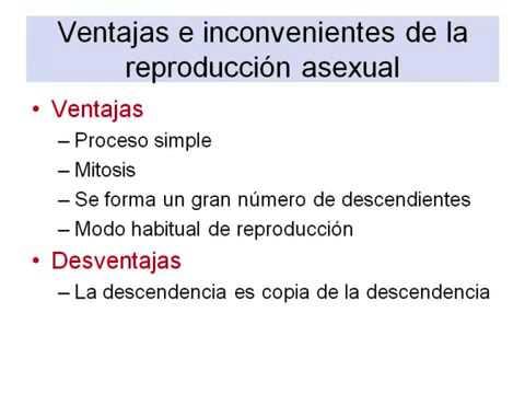 ventajas de la reproduccion asexual