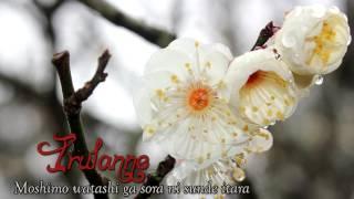 Cover images Irulanne ~ Moshimo Watashi Ga Sora ni Sunde Itara (Cover)