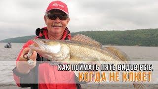 Как поймать пять видов рыб, когда не клюет?