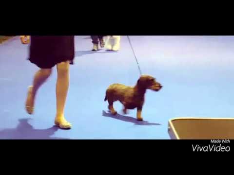 Exposition Canine À Genève 21.11.15
