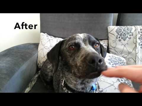 Playful Biting - Before/After - In Home Dog Training