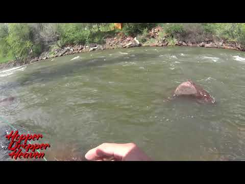FLYFISHING The Roaring Fork River During RUNOFF!  Nice RAINBOW TROUT!  RARE CUTTBOW!!!