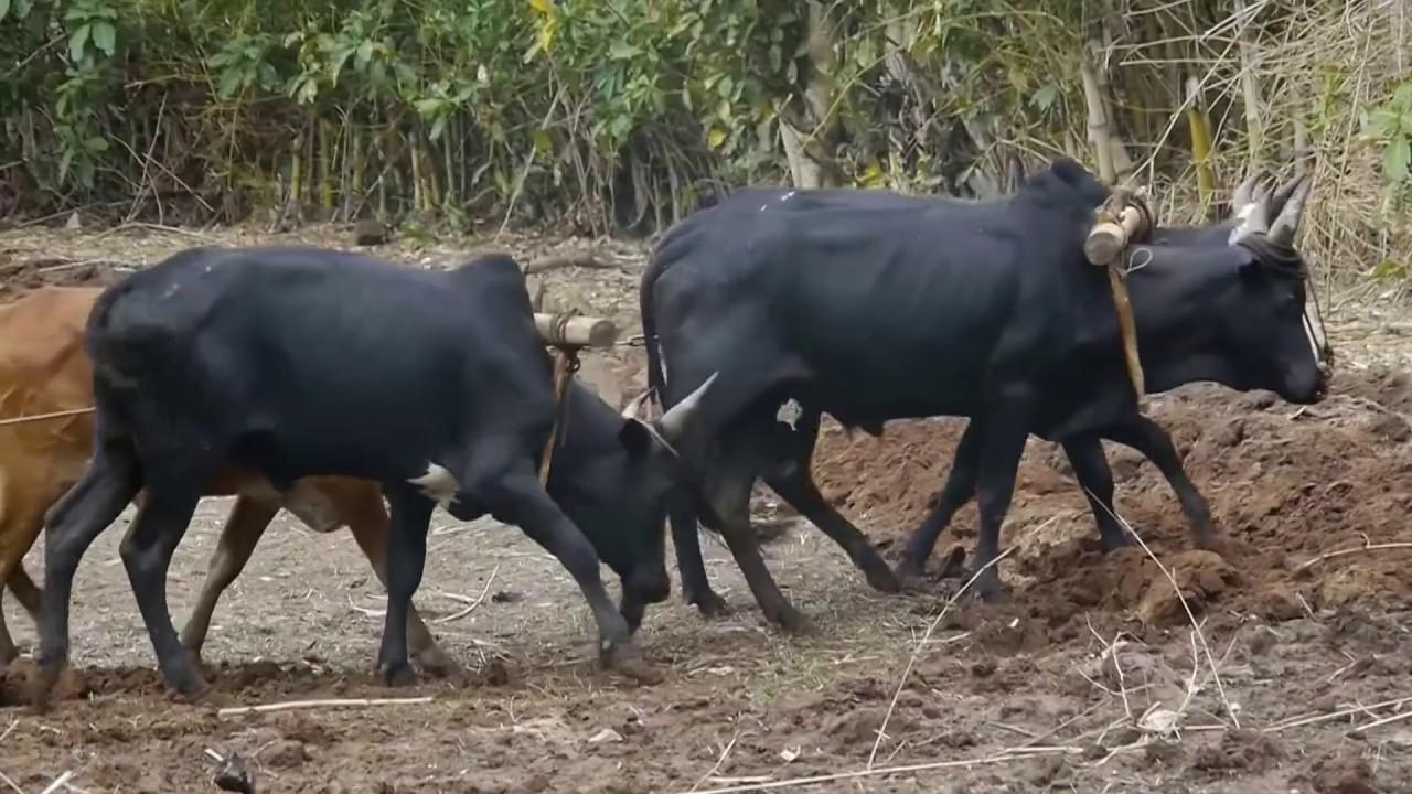 Créationsvidéo - Documentaire Ville de Vohemar à Madagascar 79162