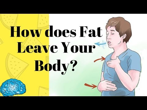 How does Fat leave the body? (Myth Busted)