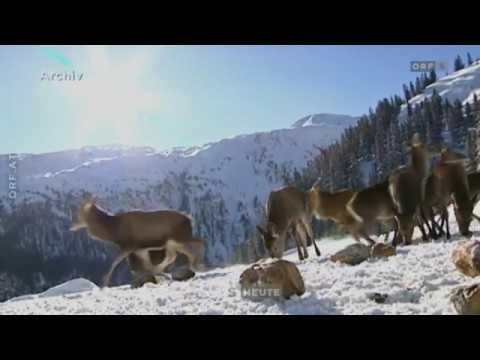 Streit um Jagdrevier ORF Salzburg heute