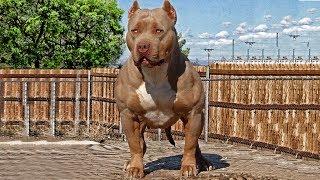 Die 10 Stärksten Hunderassen der Welt