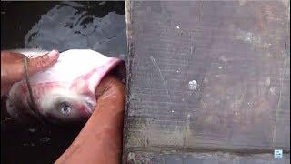 Đi bắt cá - quăng chài một phát bắt ngay chú cá mè khủng